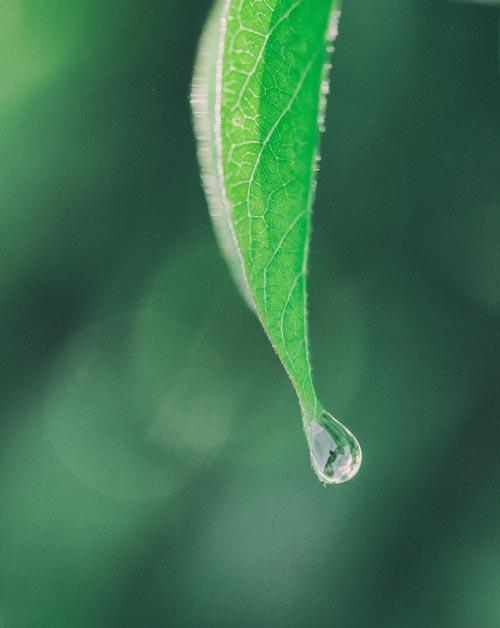 aaron-burden_leafwaterdroplet